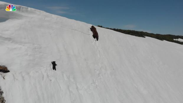 [NATL] Adorable Bear Cub Keeps Sliding Down Slope, Doesn't Give Up