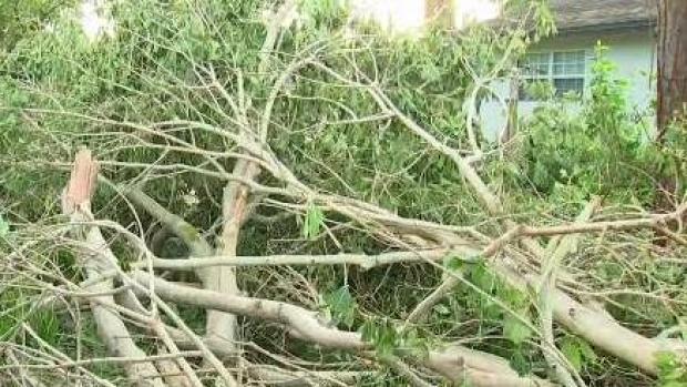 [NECN] Florida Residents and Business Owners Clean Up After Irma