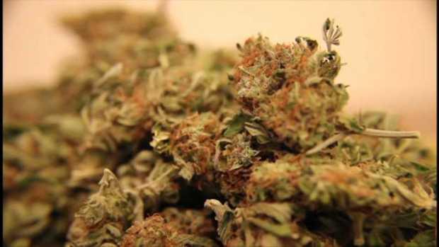 [NECN] Recreational Marijuana to Soon be Legal in Massachusetts