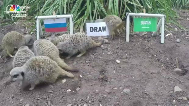 [NATL] Mystic Meerkats Predict World Cup Outcomes