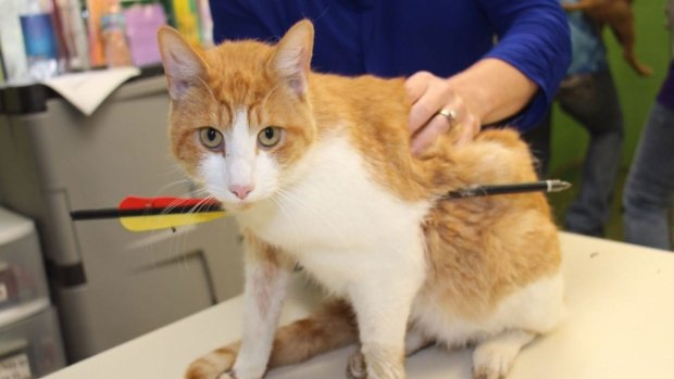 Cat Survives Crossbow Arrow Through Chest