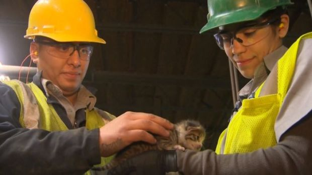 Kitten Saved From Recycling Conveyor Belt Moments Before Hitting Blades