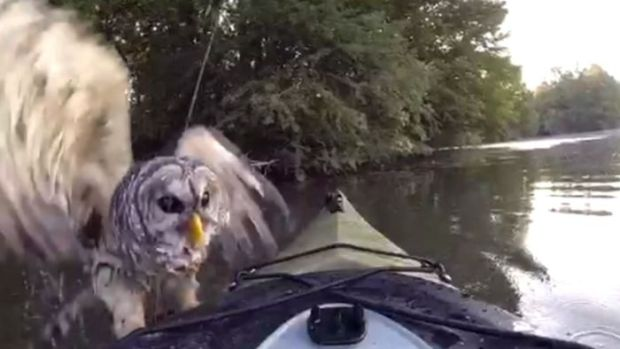 WATCH: Fisherman Accidentally Catches Giant Owl