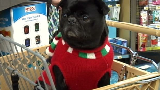 [DFW-NATL] Americans To Spend 1.5 Times More on Christmas For Pets