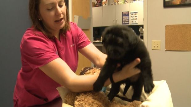 Puppy Survives Teens' BB Gun Abuse
