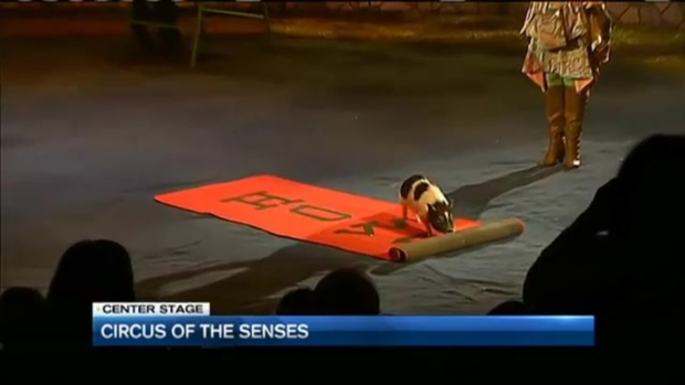 [NECN] Circus of the Senses