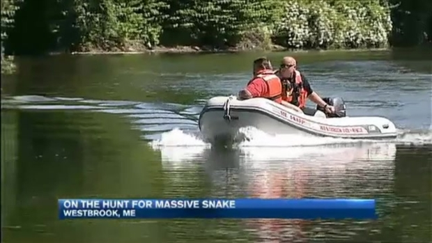 [NECN] Maine Community Curious, Frightened at Prospect of Enormous Snake