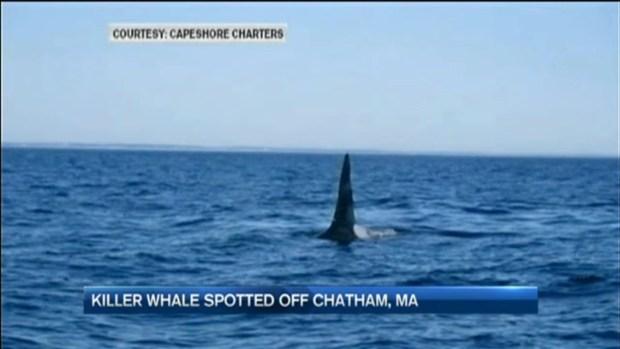 [NECN]Rare Orca Spotted off Cape Cod