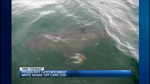 [NECN] 6-Year-Old Catches Great White Shark While Fishing Off Cape Cod