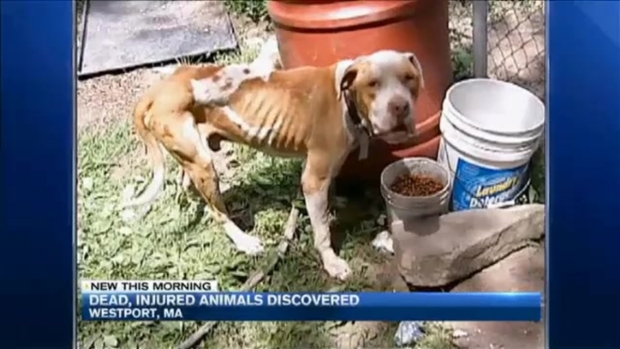 [NECN] Hundreds of Dead, Injured Animals Found on Site for 2nd Time