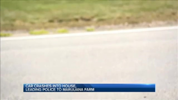[NECN] Police: Marijuana Grow Found in Home After Car Crashes Into it