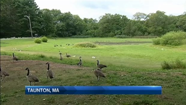 [NECN] Drought Dries up Massachusetts Pond