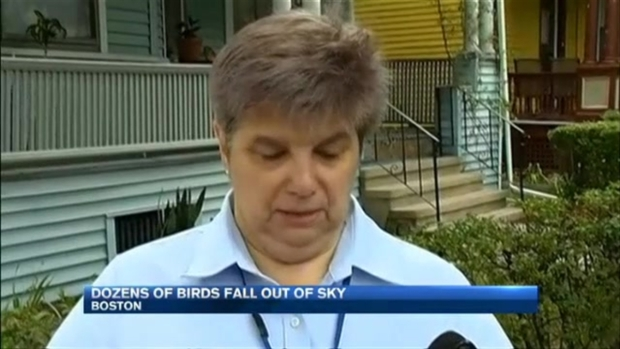 [NECN] Cats Die, Birds Fall from Sky in Dorchester