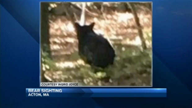[NECN] Shelter-in-Place After Bear Spotted Near Massachusetts High School