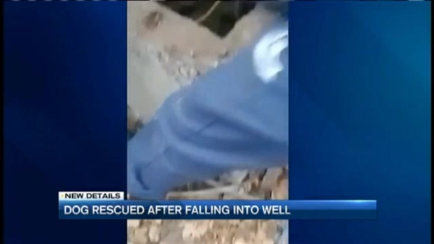 Dog Rescued After Fall Into Well