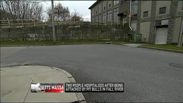 [NECN] 3 People Injured in Attacks by Group of Pit Bulls