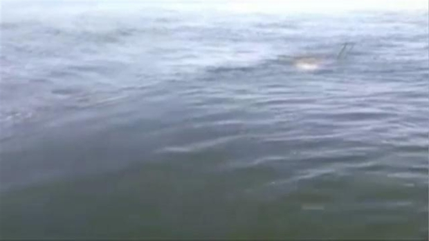 "MUST WATCH: ""What is That?!"" Boston Man Spots Big Fish"