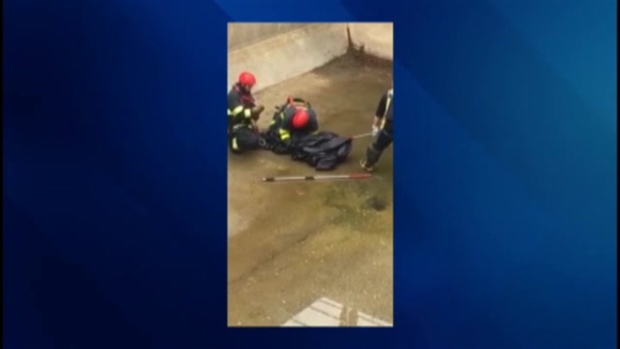 [NECN] Deer Rescued After Falling into Sewer Treatment Tank in Hull, Mass.