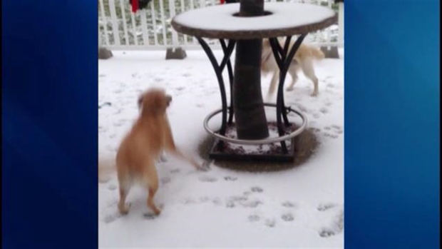Viewer Video: Dogs Enjoy the Snow
