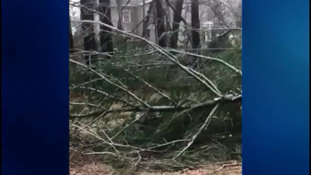 Viewer Video: Storm Damage in Millis, Mass.