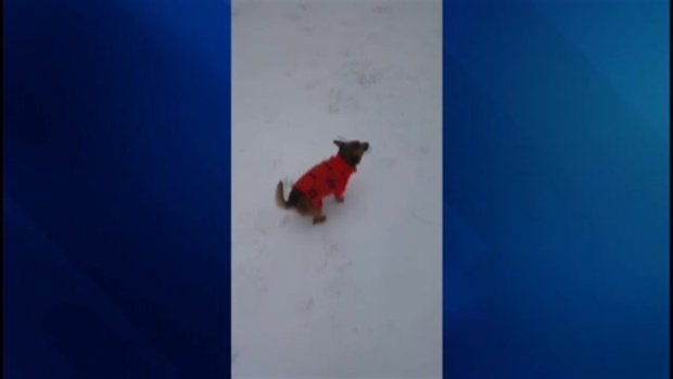 Viewer Video: A Dog's First Time in the Snow