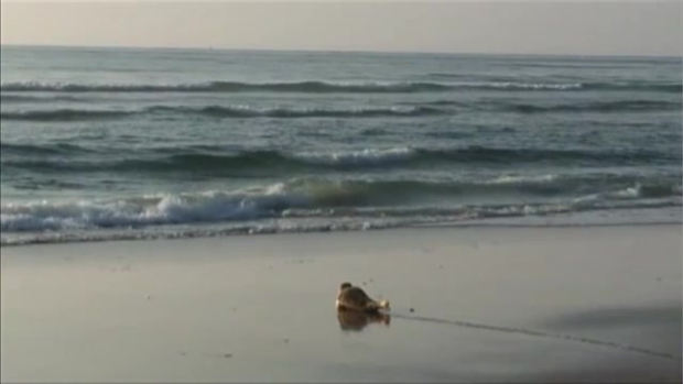 Seal Wiggles Its Way Back to Sea