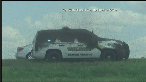 Bee Truck Overturns, Dumping Millions of Bees Onto I-35