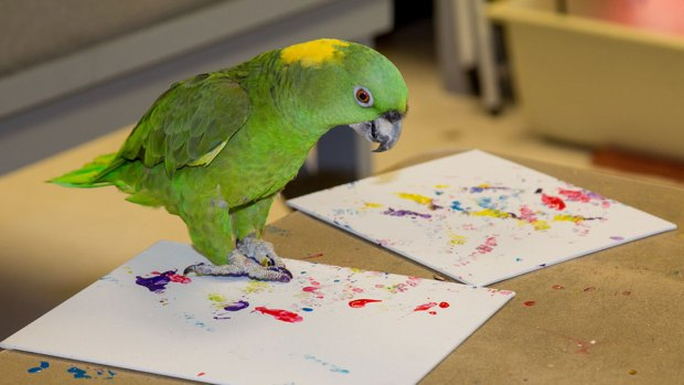 Zoo Sells Artwork Made by Animals to Raise Money for Conservation