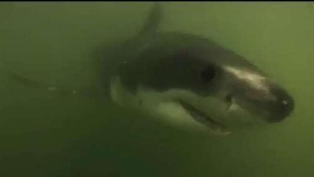 [NECN] Proposal for Shark Detection Program