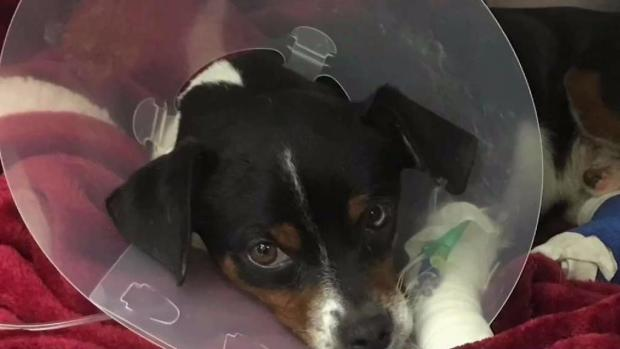 [NECN] Puppy Found Abandoned and Injured on Busy Road