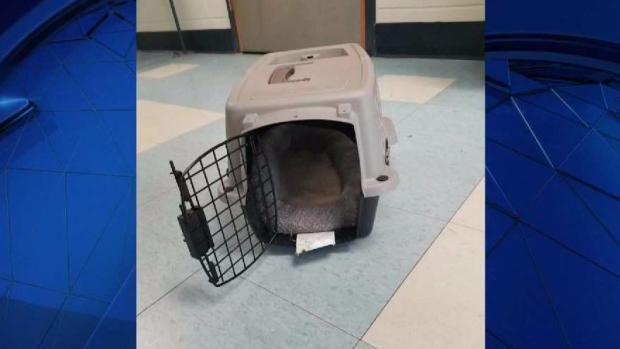 [NECN] Reward Offered After Young Dog Dies After Being Left Outside Shelter