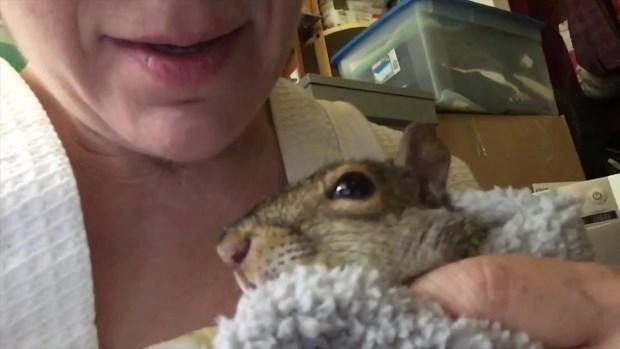 [NECN] Meet Boston Public Garden's Squirrel Whisperer