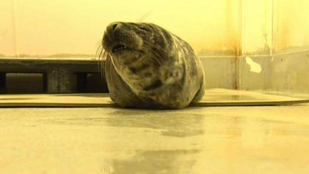 [NECN] Seal Rescued After Nor'easter Washes it Ashore in NH