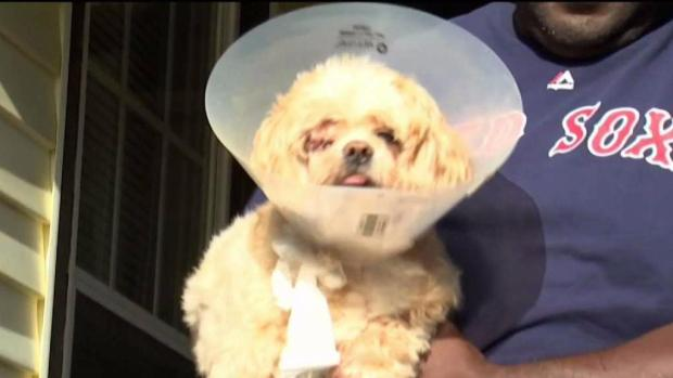 [NECN] Search for Owner of Dogs That Mauled Stranger's Dog