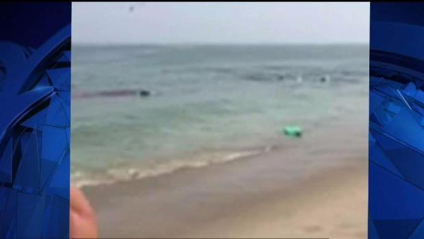 [NECN] Shark Attacks Seal Near Swimmers on Cape Cod