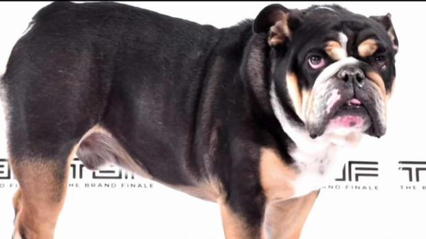 [NECN] Trainer Arrested After Jerod Mayo's Dog Found Dead