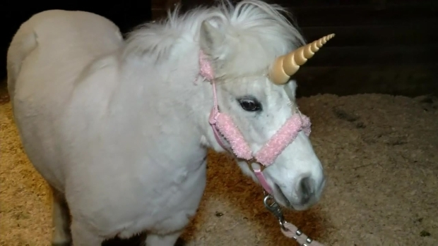 Unicorn Returned to Stable After CHP Pursuit