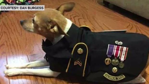 [NECN] Veteran Crafts Military Vests for Service Animals