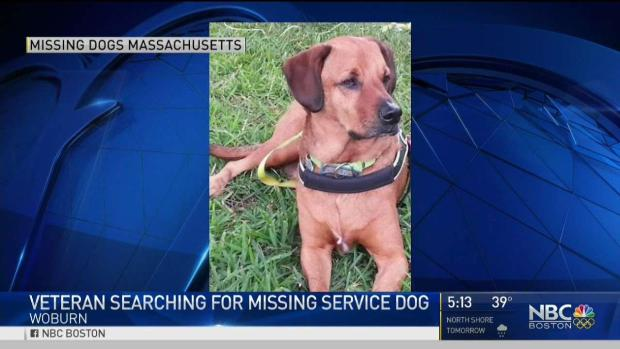 [NECN] Vietnam Vet Desperately Searching for Missing Service Dog