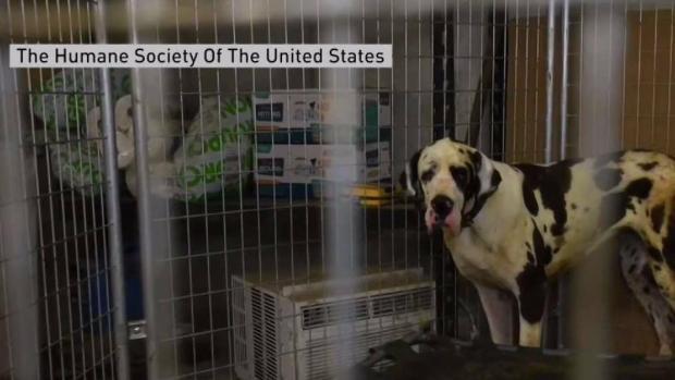 [NECN] Dozens of Dogs Found Living in Squalor