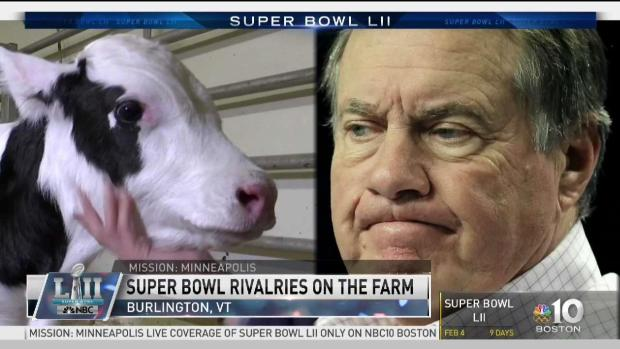 [NECN] Bill Belichick Inspires Name for Calf
