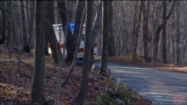 Bear Attacks Scout Leader in New Jersey