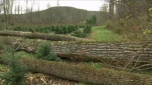 [NECN] Vt. Agriculture Sector Rebounding From Damaging Wind Storm