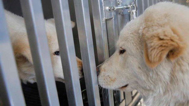 More Photos of the Dogs Rescued from a South Korean Meat Farm Arriving at JFK