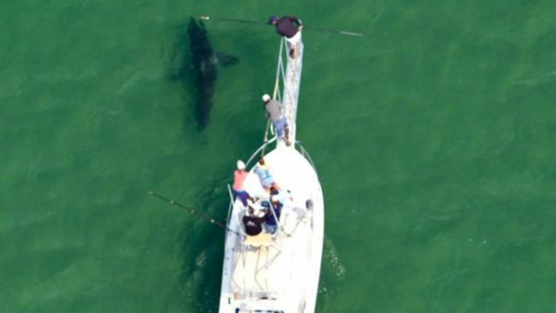 [NECN] Great White Sharks Return to the Waters off Cape Cod