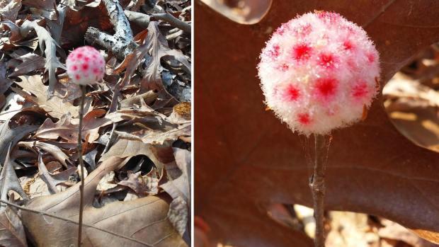 [NATL-DFW] Texas Park Ranger Discovers Mysterious 'Dr. Seuss' Plant