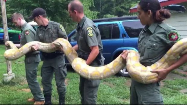 Large, Exotic Python Removed From Vt. Home