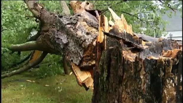 Severe Weather Rips Tree Out of Ground