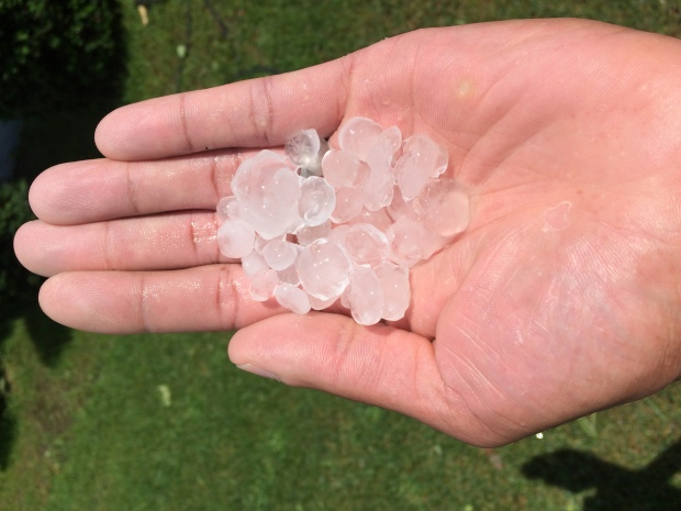 Viewer Pics of Hail, Storm Damage