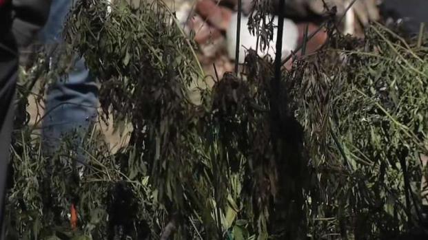 [NECN] Fire Breaks Out at Alleged Marijuana Grow House in Walpole